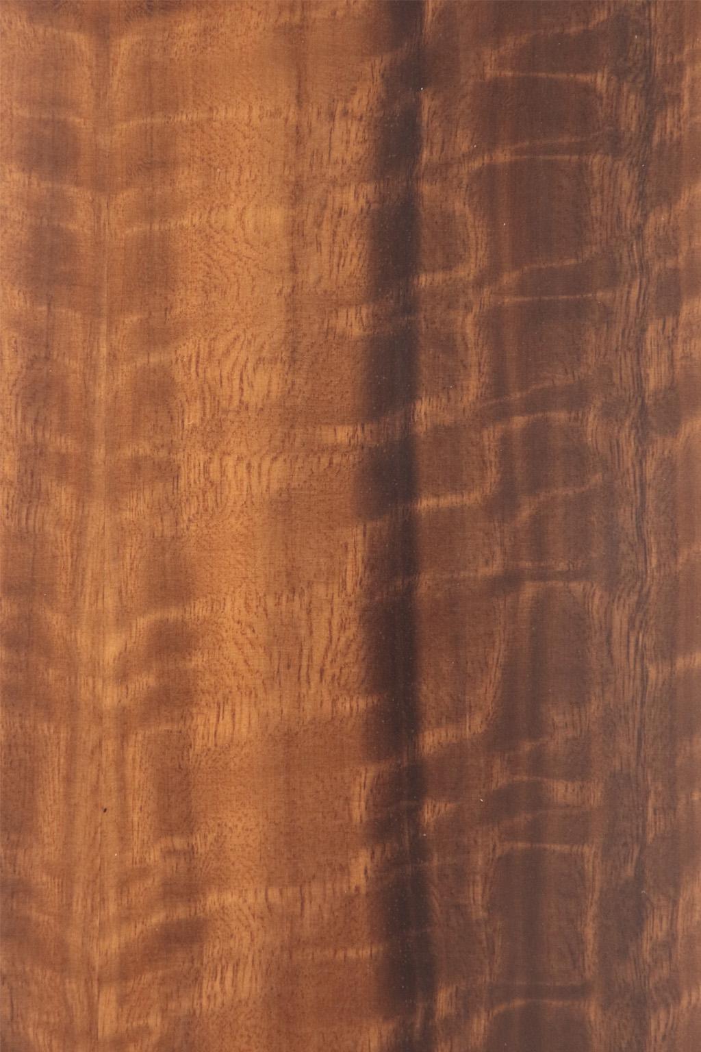 Eucalipto lucido trasparente